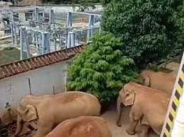 云南象群进村民家拧开水龙头喝水
