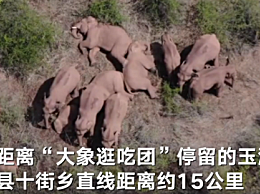 云南野象群距震中约15公里