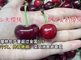全国近7成樱桃来自山东烟台