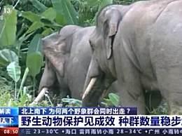 专家解读亚洲象群北迁