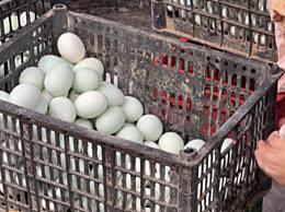 粽子店将鸭蛋白当垃圾处理
