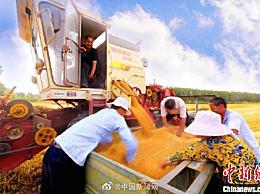 国务院:给实际种粮农民发补贴