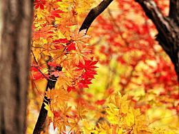 今年立秋是几月几号几点几分