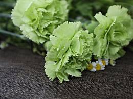 花菜算高纤维的蔬菜吗