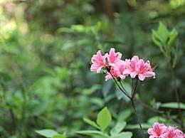 葵花籽里面粗纤维含量高吗