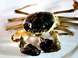 脾胃不好能不能吃螃蟹,螃蟹可能会伤肠胃,要注意喽!