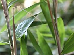 芹菜根茎和叶子里面哪个粗纤维多?答案你可能没有想到吧!